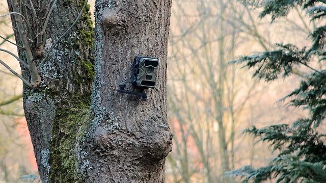 best wildlife camera under £50