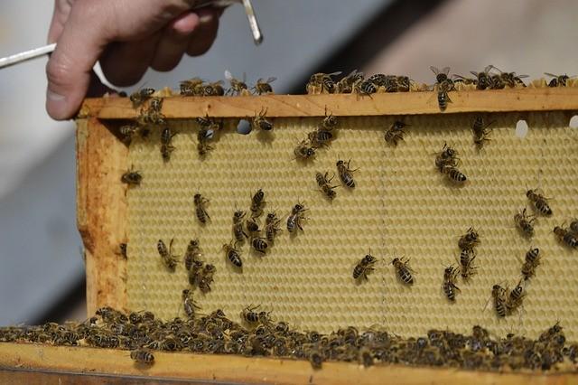 bee keeping for beginners